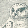 Snow-Owl postcard